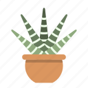 cacti, cactus, decorate, furniture, nature, office, potted icon