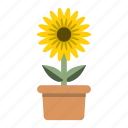 blossom, ecology, farming, garden, nature, potted, sun flower icon