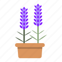 blossom, ecology, garden, herb, lavender, nature, potted icon