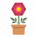 bloom, blossom, ecology, flora, garden, peony, spring icon