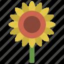 sunflower, stem, gardening, flower, bloom