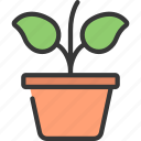 growing, plant, gardening, flower, potted