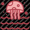 jellyfish, sea, life, oceanic, ocean, nature