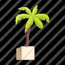 eco, nature, palm, plant, shadow, tree, tropics