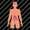 neuroinflammation, brain, guts, human, vagus nerve, intestines icon