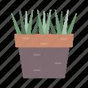 garden, grass, pot, terace