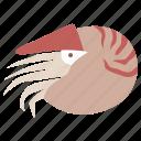 cephalopod, creature, mollusc, nautilus, prehistoric, sea, shellfish icon