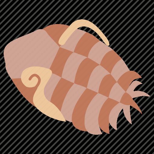 arthropod, creature, fossil, prehistoric, sea, trilobite icon