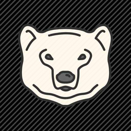 animal, bear, bear market, polar bear icon