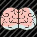 brain, neurology, health, medical, intelligence