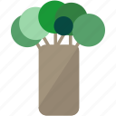baobab tree, rain forest, tree icon
