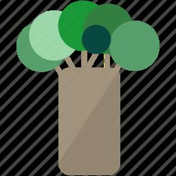 baobab tree, rain forest, tree icon