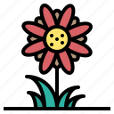bloom, blossom, flora, flower, plant