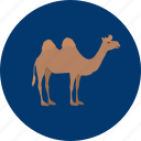 animal, camel, eid, islam, ramadan, religion icon