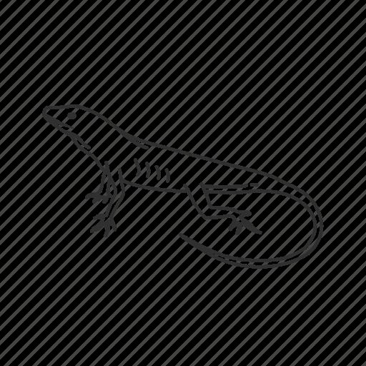 anole lizard, lizard, reptile icon