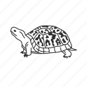 box turtle, crescent turtles, emydidae family, reptile, slow, tortoise, turtle icon