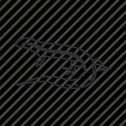 animal, lizard, reptile, small lizard, stripped lizard icon