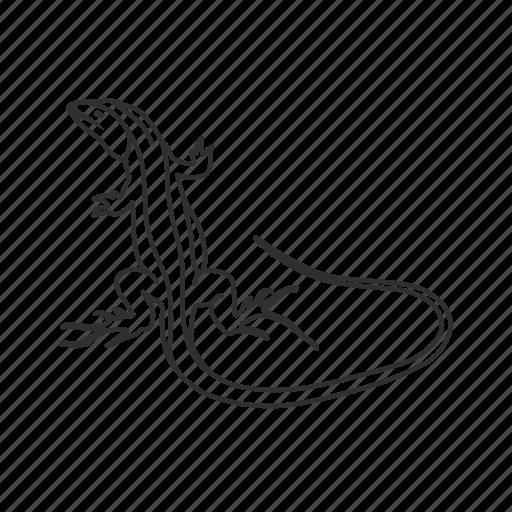 lizard, reptile, tong tailed grass lizard icon