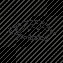 mud turtle, reptile, turtle icon