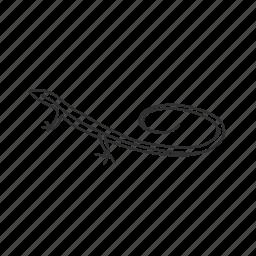 lizard, racerunner lizard, reptile icon