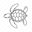 marine turtle, reptile, sea turtle, turtle icon