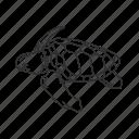 sea turtle, turtle, reptile, marine turtle