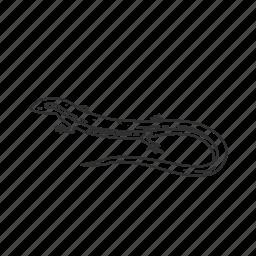 lizard, reptile, skink lizard icon