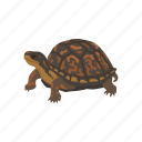 animal, box turtle, reptiles, shell, terrapene, turtle, vertebrates