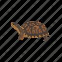 animal, box turtle, reptiles, shell, terrapene, turtle