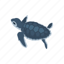 animal, reptiles, sea turtle, shell, turtle, vertebrates icon