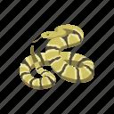 animal, rattlesnake, reptile, serpent, snake, venomous snake, vertebrates icon