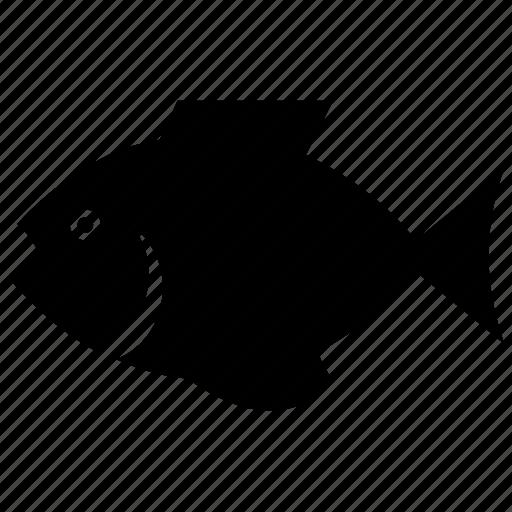 aquatic animal, fish, goldfish, sea creature, water animal icon