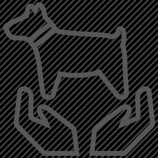 animal, care, dog, hand, pet icon