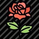 flower, plant, prickie, rose, valentine