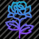 flower, prickie, rose, plant