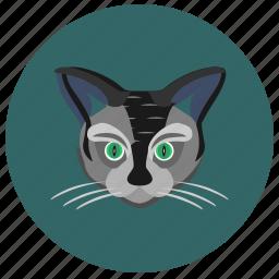 animal, avatar, cat, face, kitty, round icon
