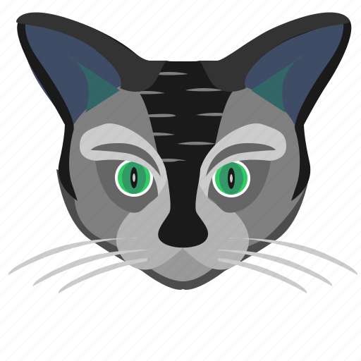 animal, avatar, cat, face, head, kitty icon