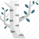birch, botanical, ecology, nature, tree icon
