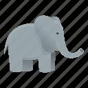 animal, baby, elephant, nature