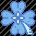 clover, good, leaf, luck, plant