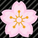 blossom, cherry, festival, flower, pink, sakura, season icon