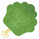 butterhead, healthy, lettuce, vegetable icon