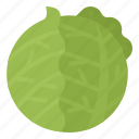 cabbage, headed, healthy, vegetable icon