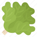 escarole, healthy, lettuce, vegetable icon