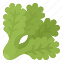 filey, healthy, iceberg, lettuce, vegetable icon
