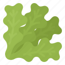 green, green oak, healthy, lettuce, oak, vegetable icon