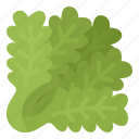 fiber, healthy, lettuce, vegetable icon