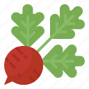 food, radishes, root, vegetable icon