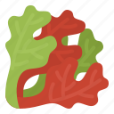 healthy, lettuce, oak, red, vegetable icon
