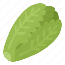 healthy, lettuce, romaine, vegetable icon